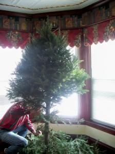 loosening the tree