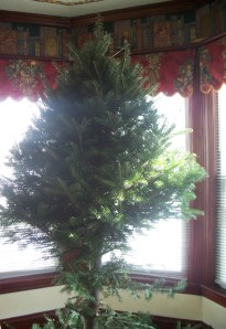 lopped tree