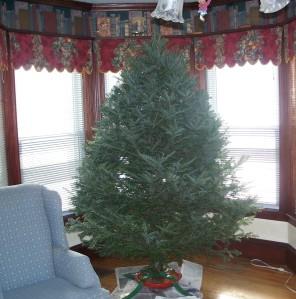 undecorated tree, 31 Jan. 2009