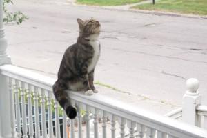 cat on porch, under birds' nest in hanging basket