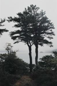 fisheddytrees