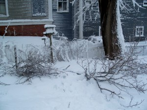 snowstormdamagebranchesfeb20093