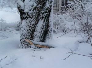 snowstormdamagelimbfeb2009