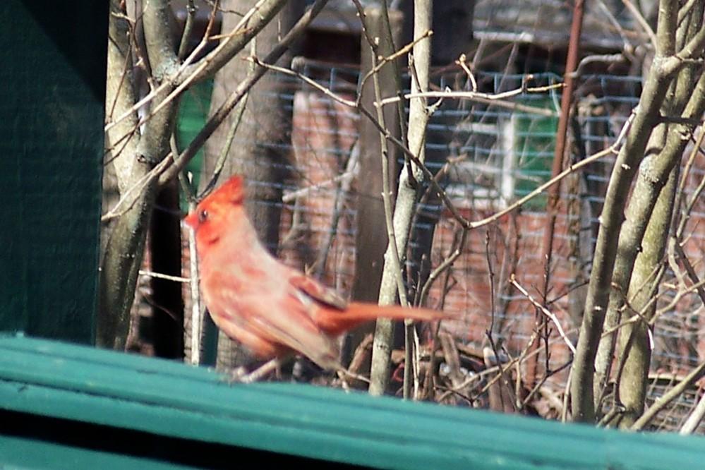 cardinalondeckprofileapril2009
