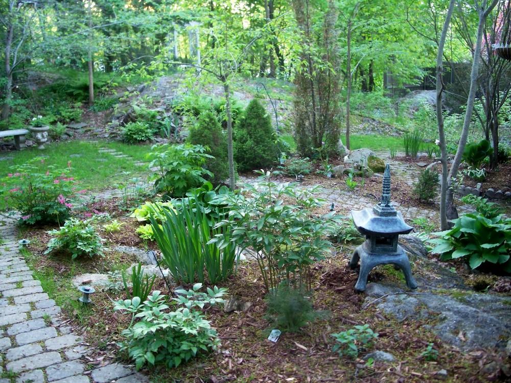 backyard, May evening