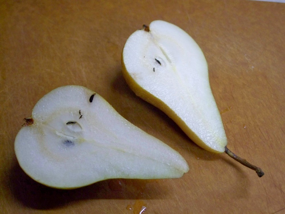 bosc pear, bisected, feb 2010