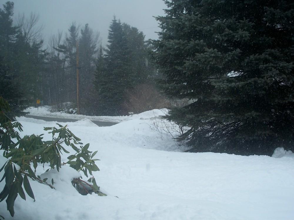snow in yard, 26 Feb 2010