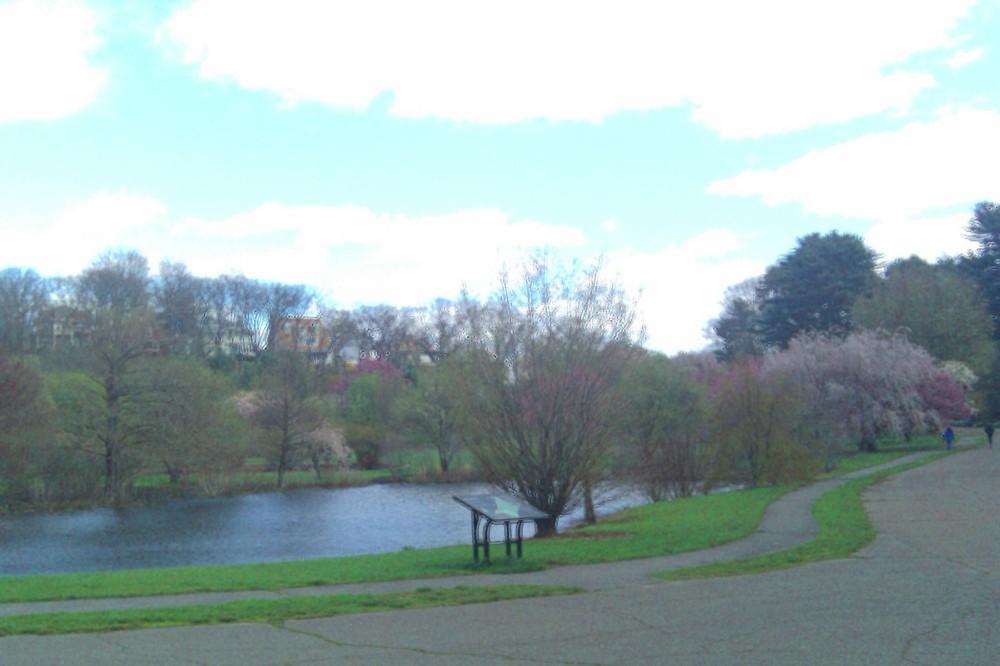 Pond, Arnold Arboretum, 10 April 2010