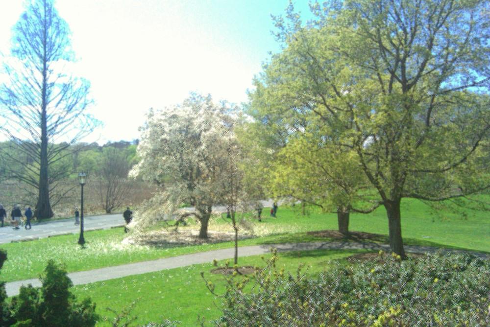 Near entrance to Arnold Arboretum, 10 April 2010
