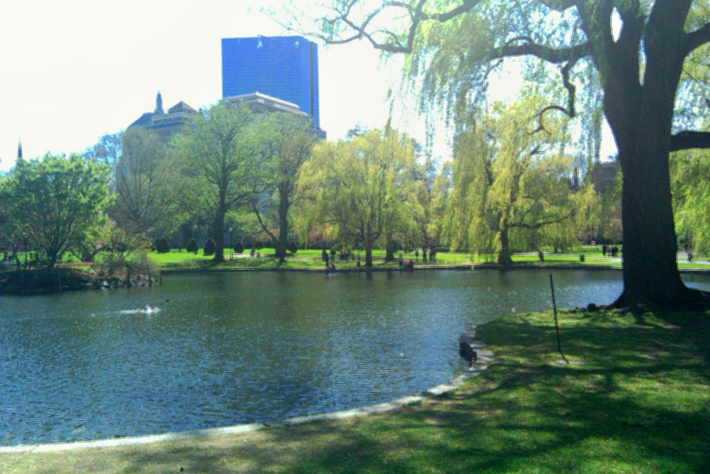 Boston Common gardens, 10 April 2010