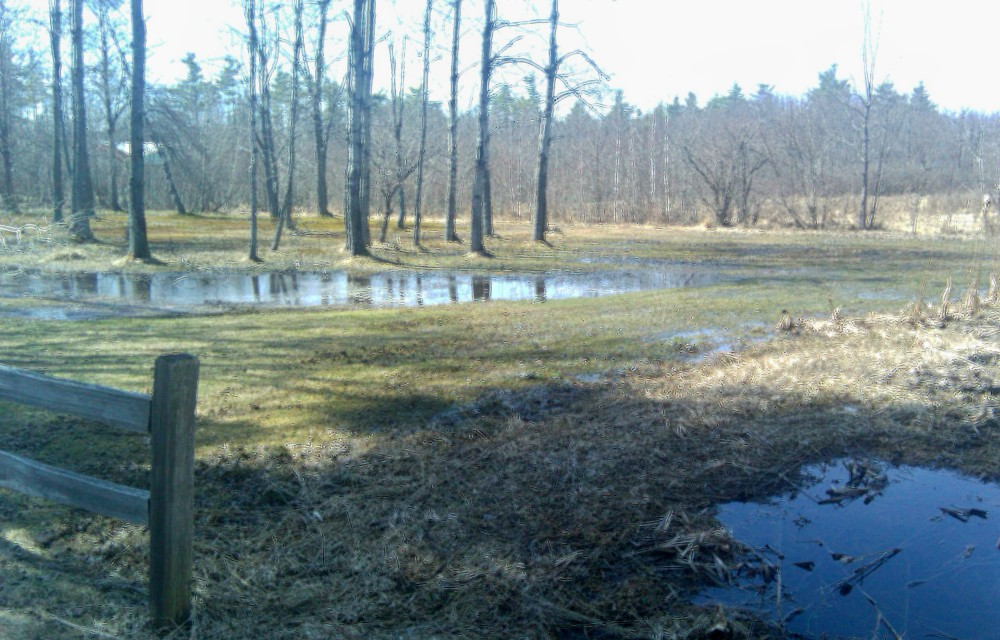 vernal pools and ponds, april 2010