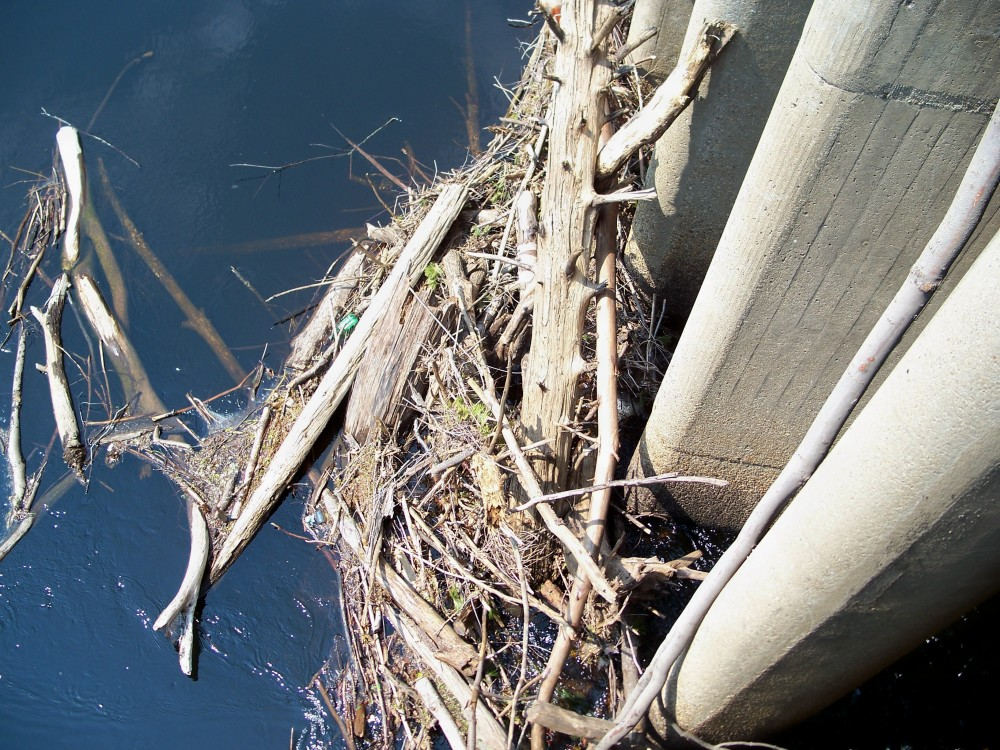 Hopkinton Dam debris, 30 April 2010
