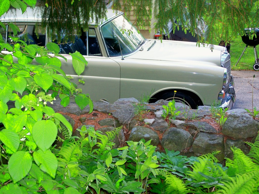 shade plantings, wall and old Mercedes, mid-May 2010