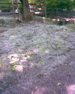 Lenox- Kennedy Park - snow
