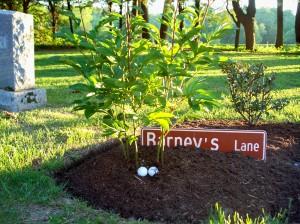 Stockbridge Cemetery - Barney's Lane