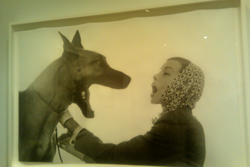 great dane and woman, Avedon exhibit, Oct 2010