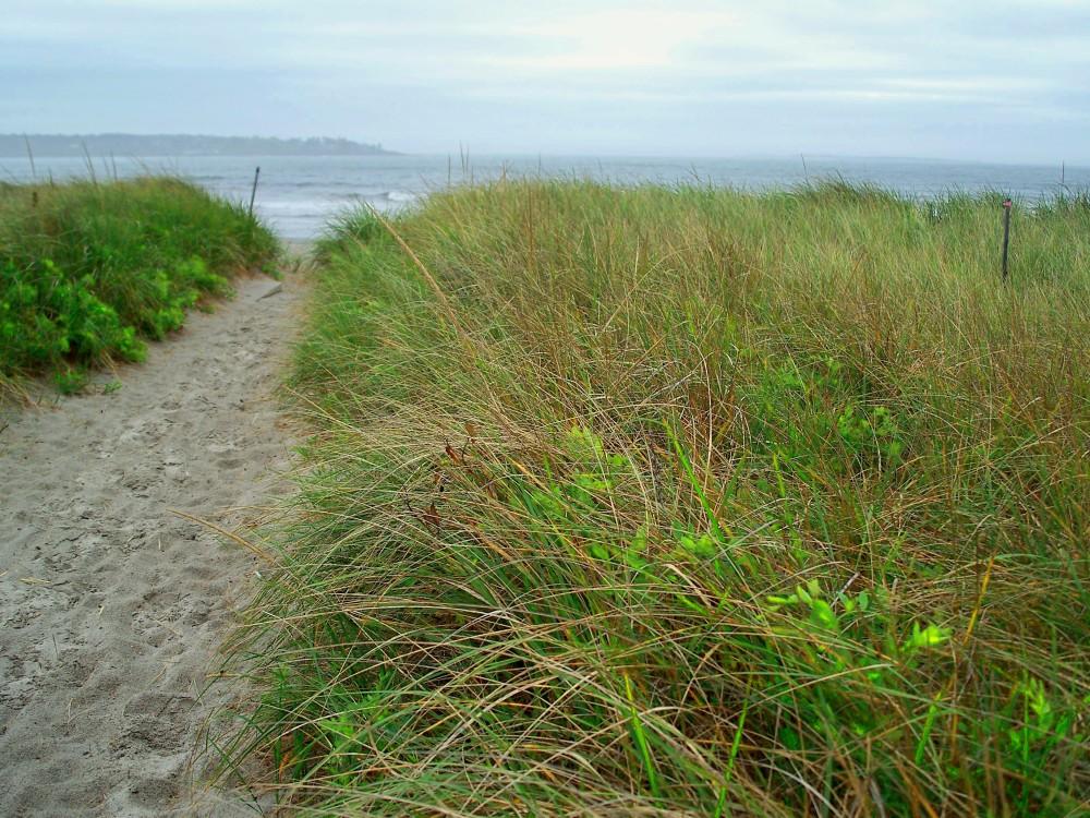 Pine Point Beach path