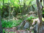 Black Forest Nursery (Boscawen) rock ledges