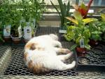 Kathan Gardens (Newport) calico cat