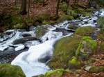 icy brook and mossy rocks