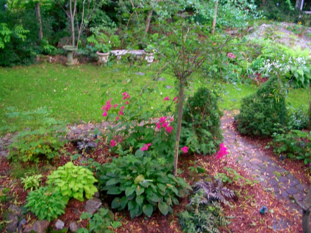 backyard with paths (coastal Maine), midJuly 2009