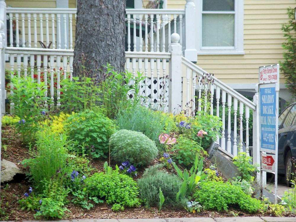 front garden on hill under spruce, June 2009