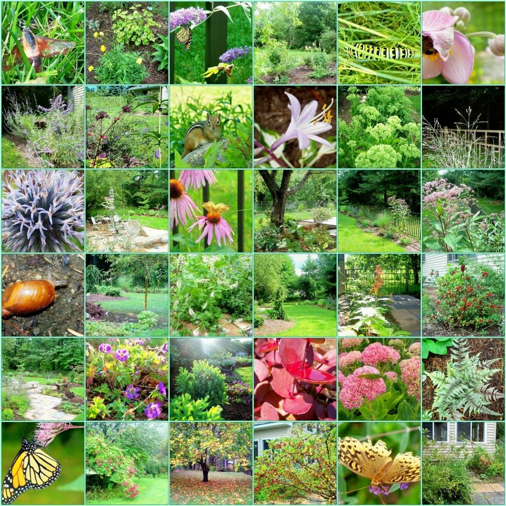2011 Garden Mosaic - Aug to Oct