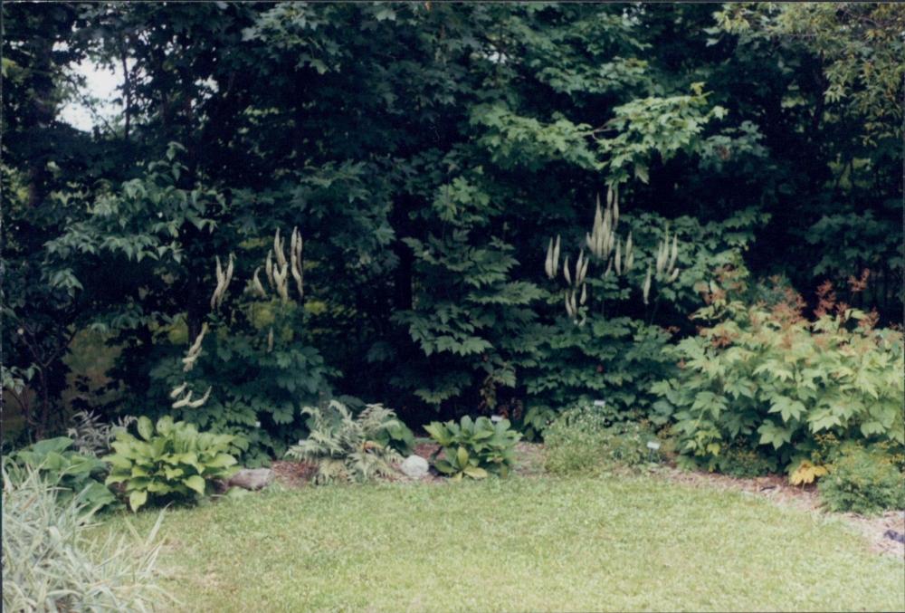 Maine garden, with snakeroot - 2000?