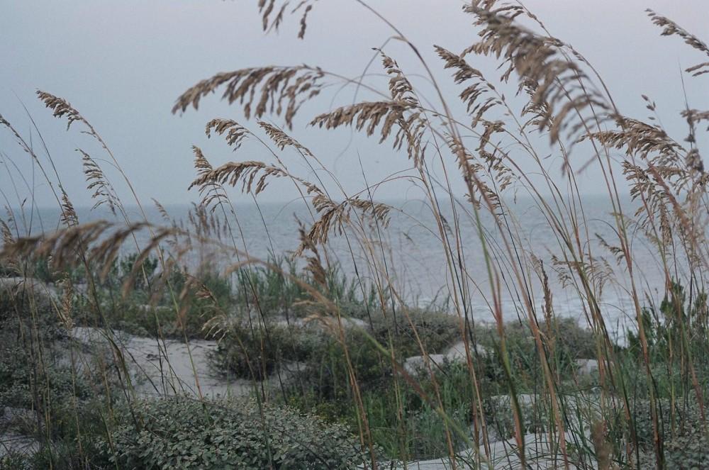Jekyll Island, grasses, 2005