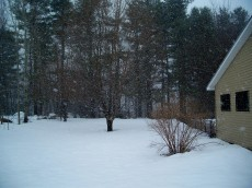 Side yard with honeysuckle, with snow - 21 March 2011