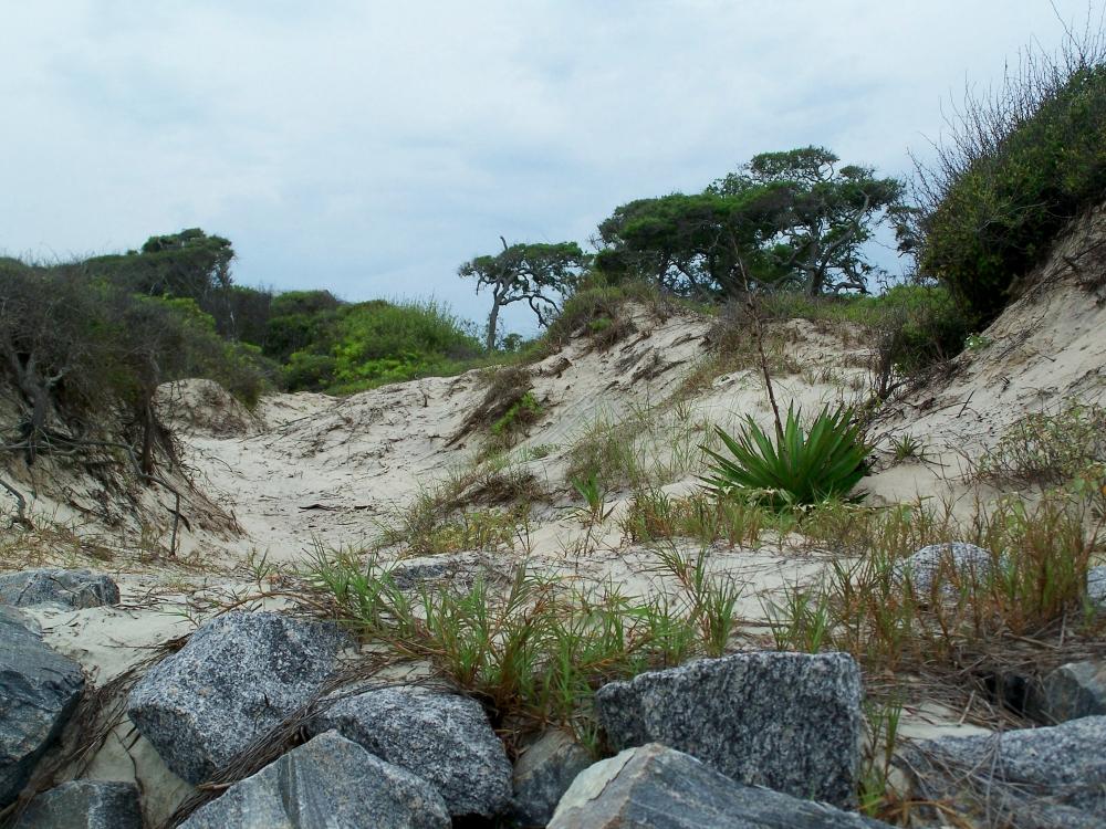 Rocks and dunes near condo, Jekyll Island, 21 April 2012