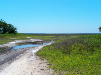 high marsh, JI causeway, 25 April 2012
