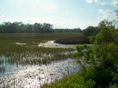 clam creek marsh, JI, 22 April 2012