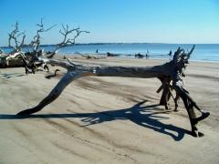 boneyard beach forms, JI, 25 April 2012