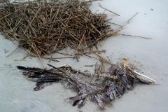 skeletonised pelican? , JI, 21 April 2012