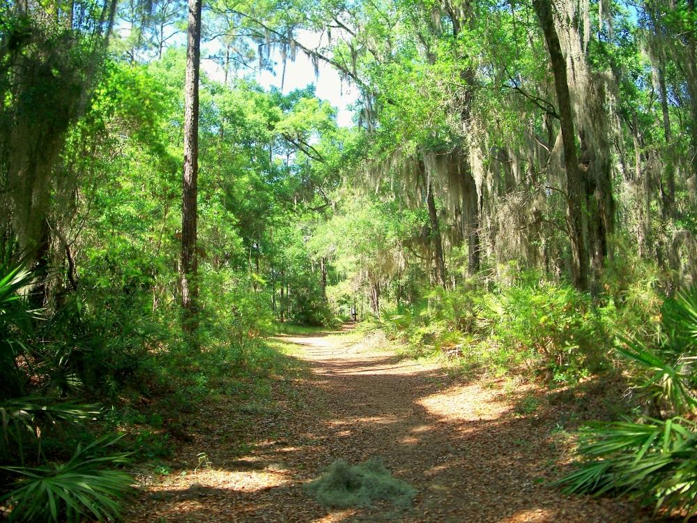 Alice Richards Botanical Trail, SSI, 23 April 2012
