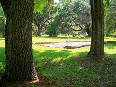 trees and foundation, Fort Frederica, SSI, 23 April 2012