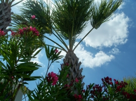 oleander and palms at Coastal Kitchen, SSI, 23 April 2012