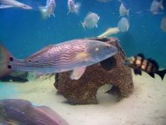 Tidelands - shark tank, JI, 23 April 2012