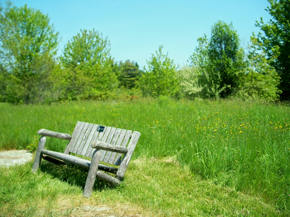 bench in meadow, PLP, 28 May 2012