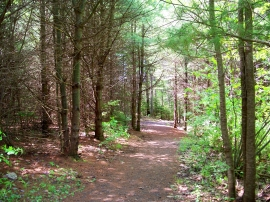 wooded path, PLP, 28 May 2012