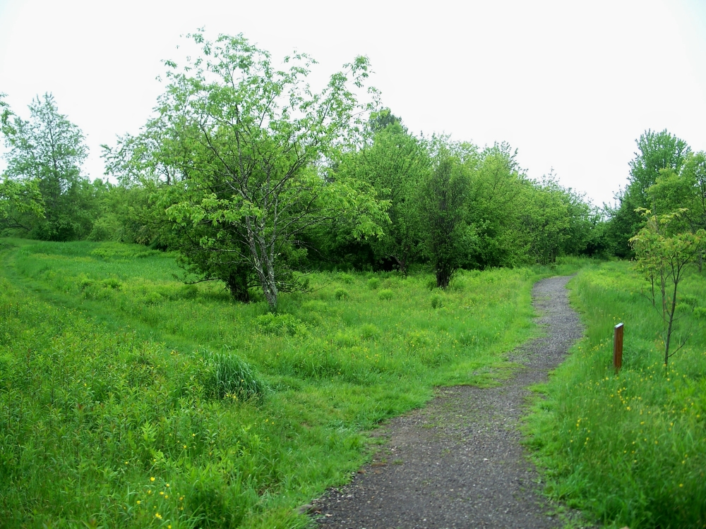 two paths diverge in a meadow, PLP, 29 May 2012