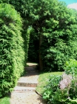pathway through hedges
