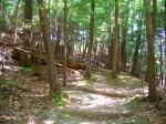ravine trail