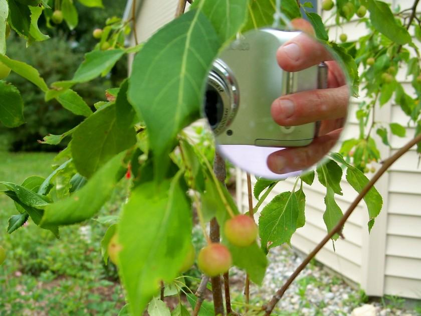 cameraingardenmirrorjadecrabapplepic5Aug2011